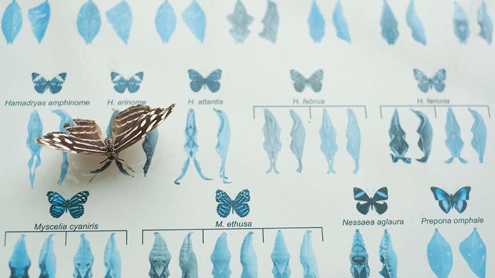Seaforde Gardens Northern Ireland Butterfly House